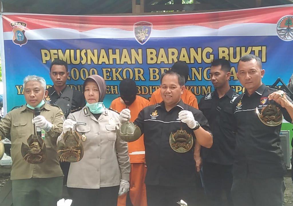 Paten 2 Pelaku Penyelundupan 6000 Ekor Belangkas di Bekuk Ditpolairud Polda Riau